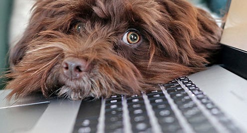 cute dog on laptop keyboard for employee monitoring tools